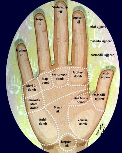 A kéz ujjai, a tenyér dombjai